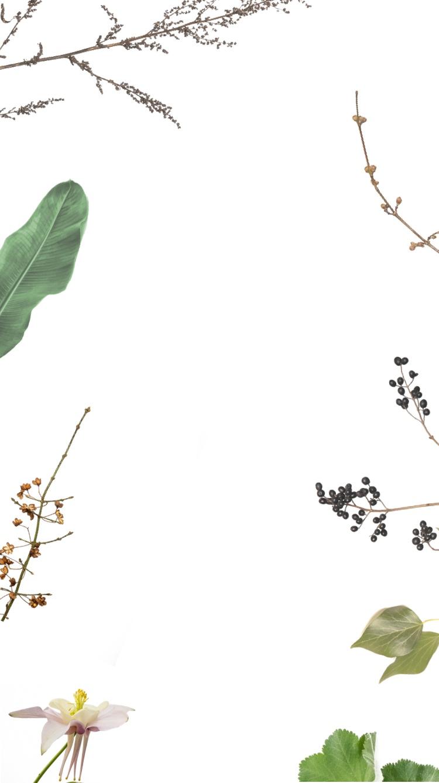 Startbild Sommer Blumen